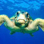 Settimana della Natura all'Area Marina Protetta Plemmirio