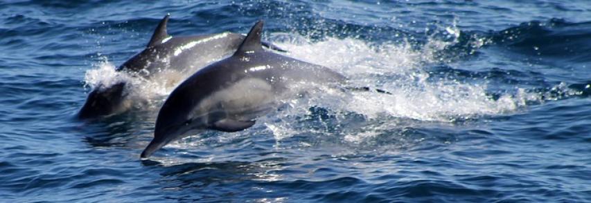 Avvistamento di delfini dalla sede dell'Area Marina Protetta del Plemmirio