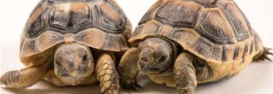 Photo Ark, set fotografico allo zoo: obiettivo sulle tartarughe
