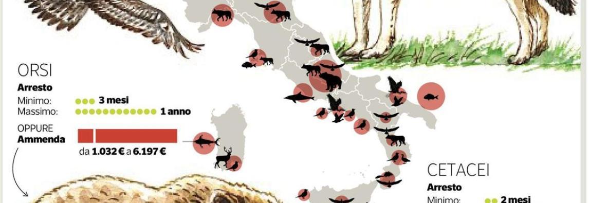 Dossier WWF: Nel mirino dei bracconieri