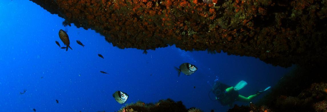 Presentato il documentario Ispra sulla biodiversità marina
