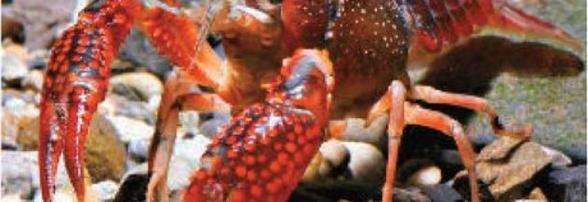Il mediterraneo preso d`assalto dagli alieni 150 nuove specie invasive negli ultimi anni
