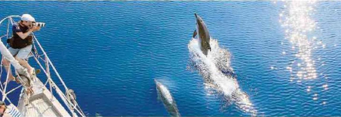 08-05-2018 – STAMPA  Così si diventa amici dei delfini. Sanremo, al via la campagna per fare amicizia con i cetacei *di Gavino Giulio