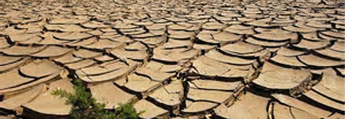 Allarme del Cnr Siccità, il 2017 l`anno peggiore degli ultimi due secoli in Italia . 2017, un deserto chiamato Italia *di Arcovio Valentina