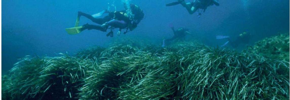 18-03-2019 – MATTINO NAPOLI  Robot nel Regno di Nettuno scoperti 24 habitat marini di Zivelli Massimo